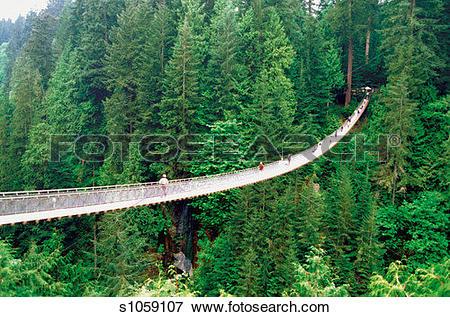 Bridge clipart forest. Capilano clipground picture of