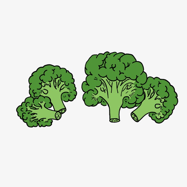 Hand painted cartoon png. Broccoli clipart