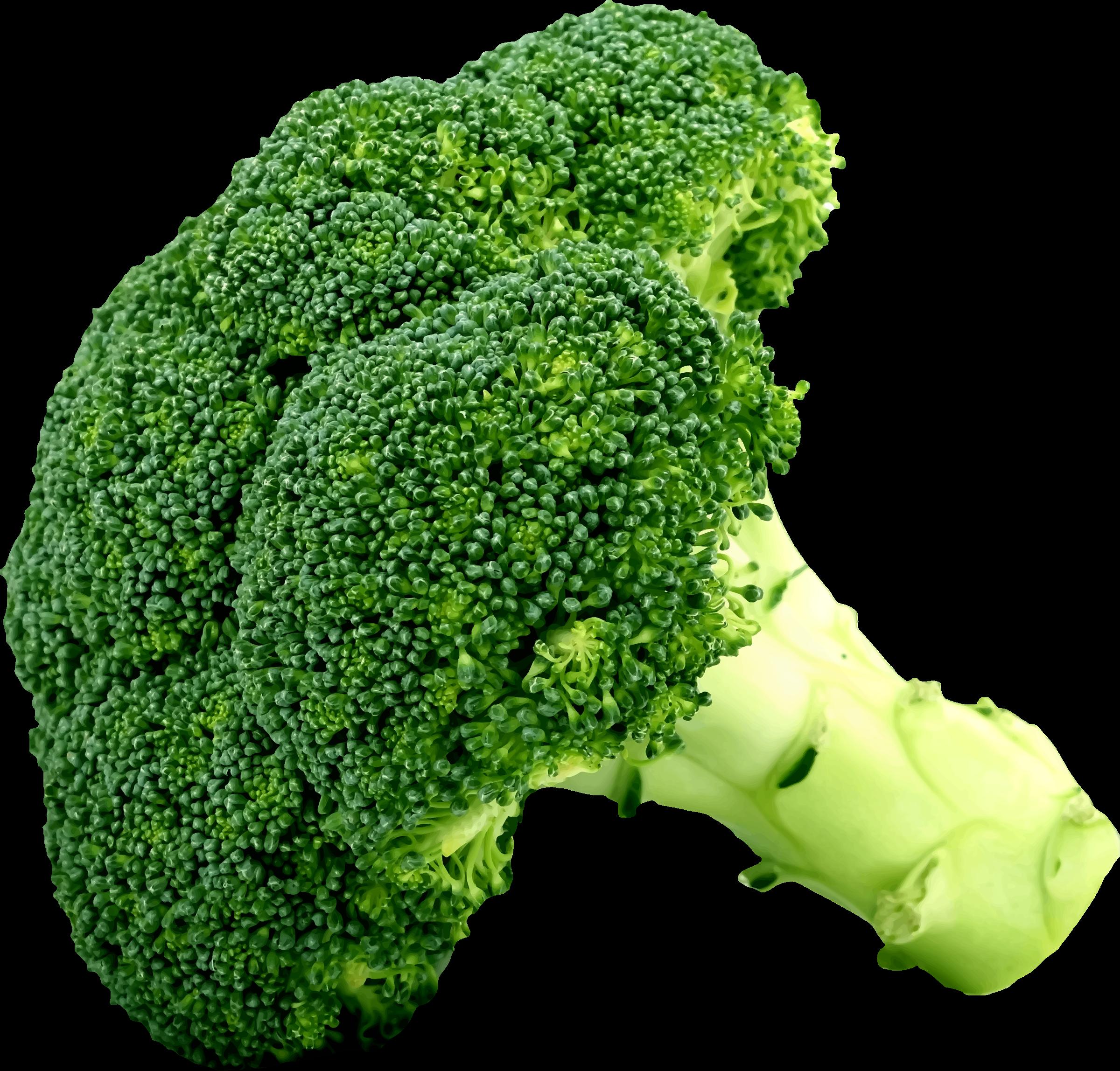 Broccoli clipart. Big image png