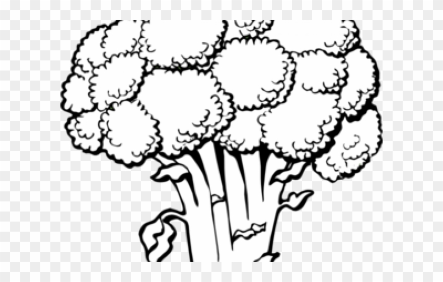 Broccoli clipart black and white. Coloring page