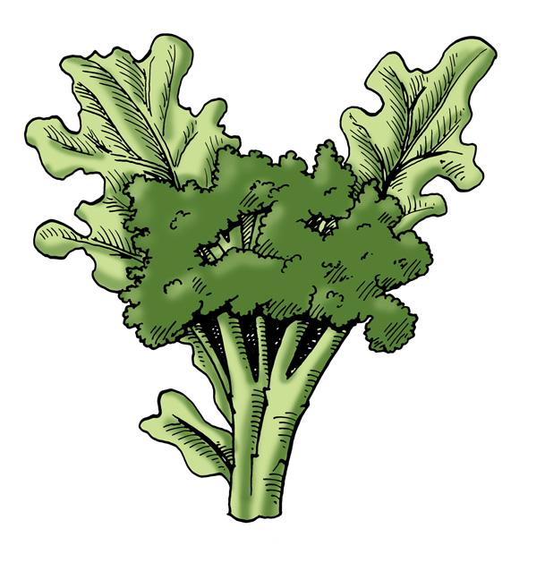 Planting harvesting pests and. Broccoli clipart broccoli plant