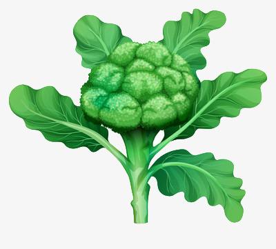 Broccoli clipart broccoli plant. Cartoon green vegetables fresh