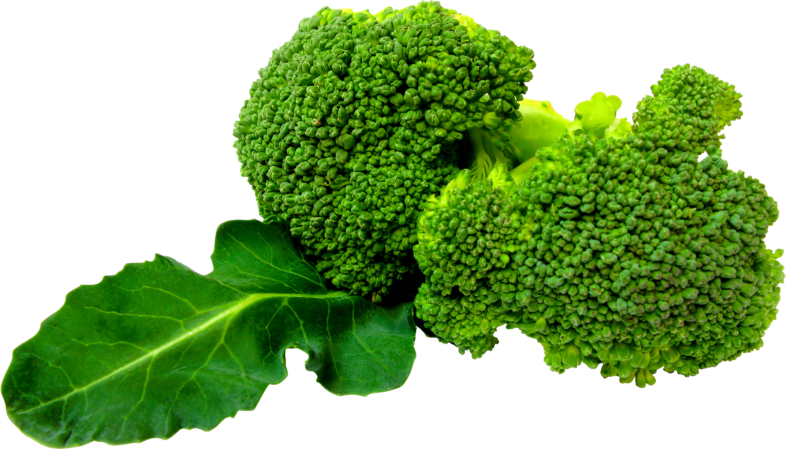 Clipart vegetables vege. Broccoli png image free