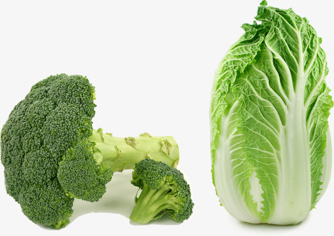 Cabbage clipart napa cabbage. Broccoli chinese vegetables png