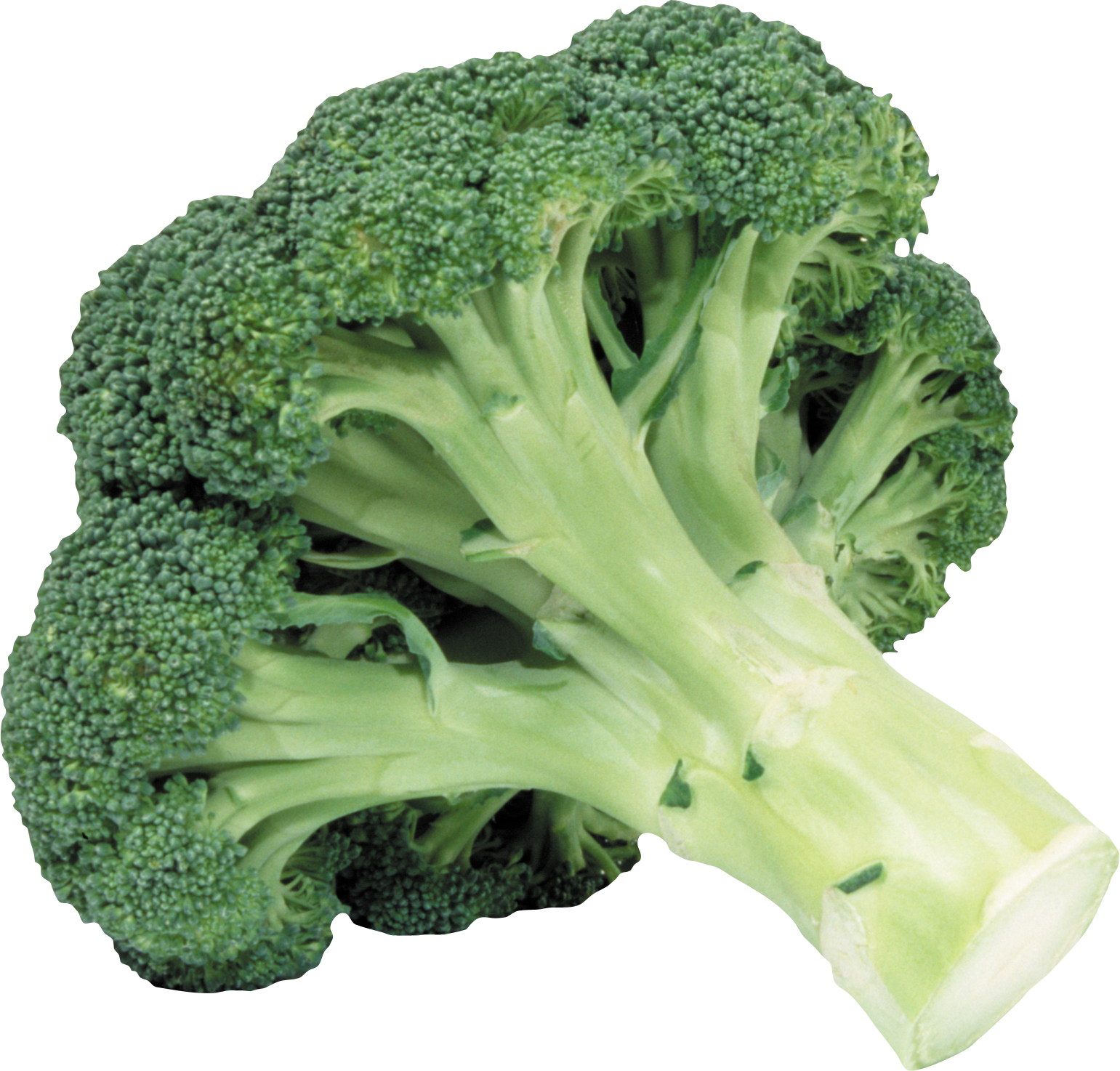 Png image free pictures. Lettuce clipart broccoli