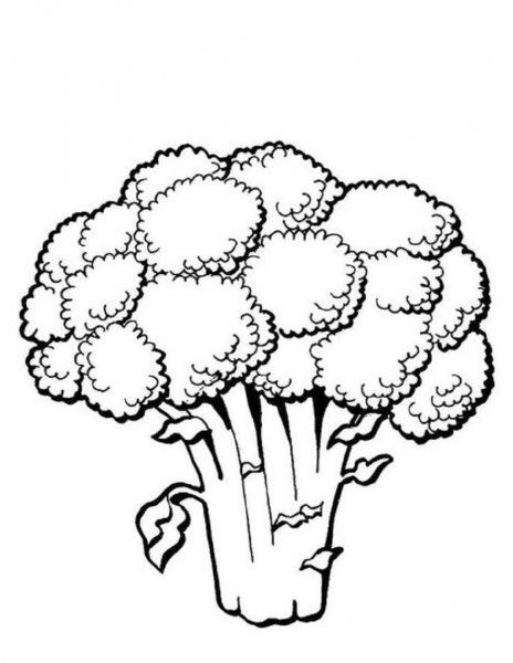 Speech therapy pinterest and. Broccoli clipart coloring page