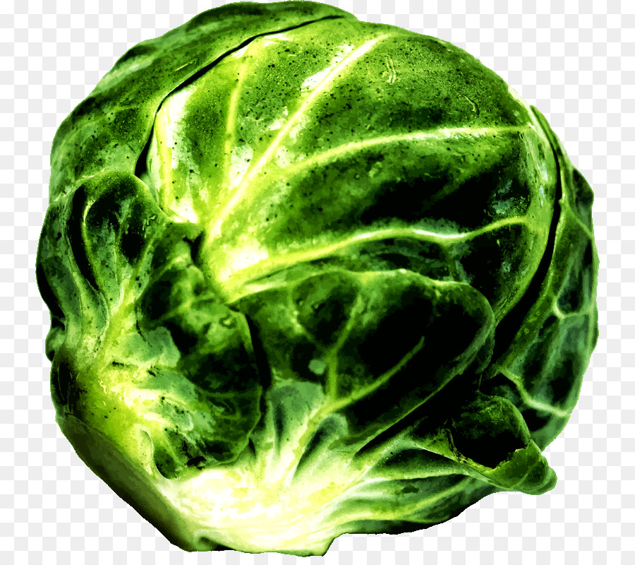Brussels sprout food clip. Cabbage clipart leafy vegetable