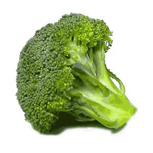 Clip art free vector. Broccoli clipart lettuce