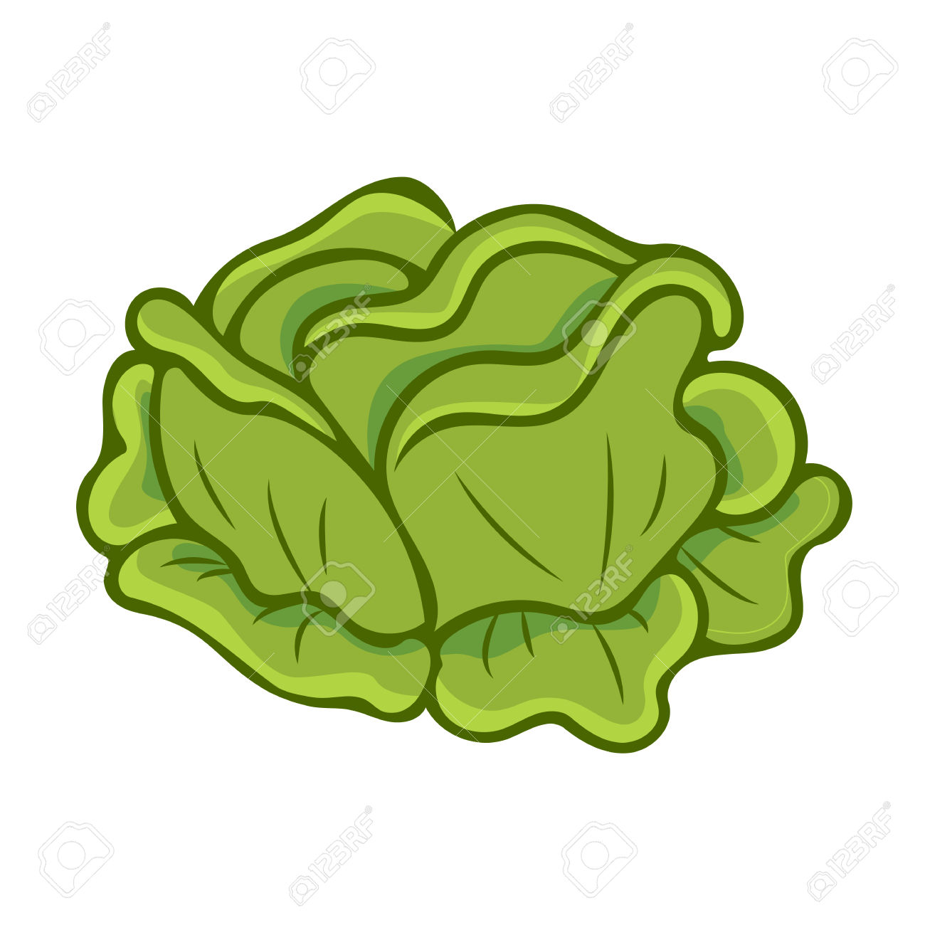 Pencil and in color. Cabbage clipart cartoon