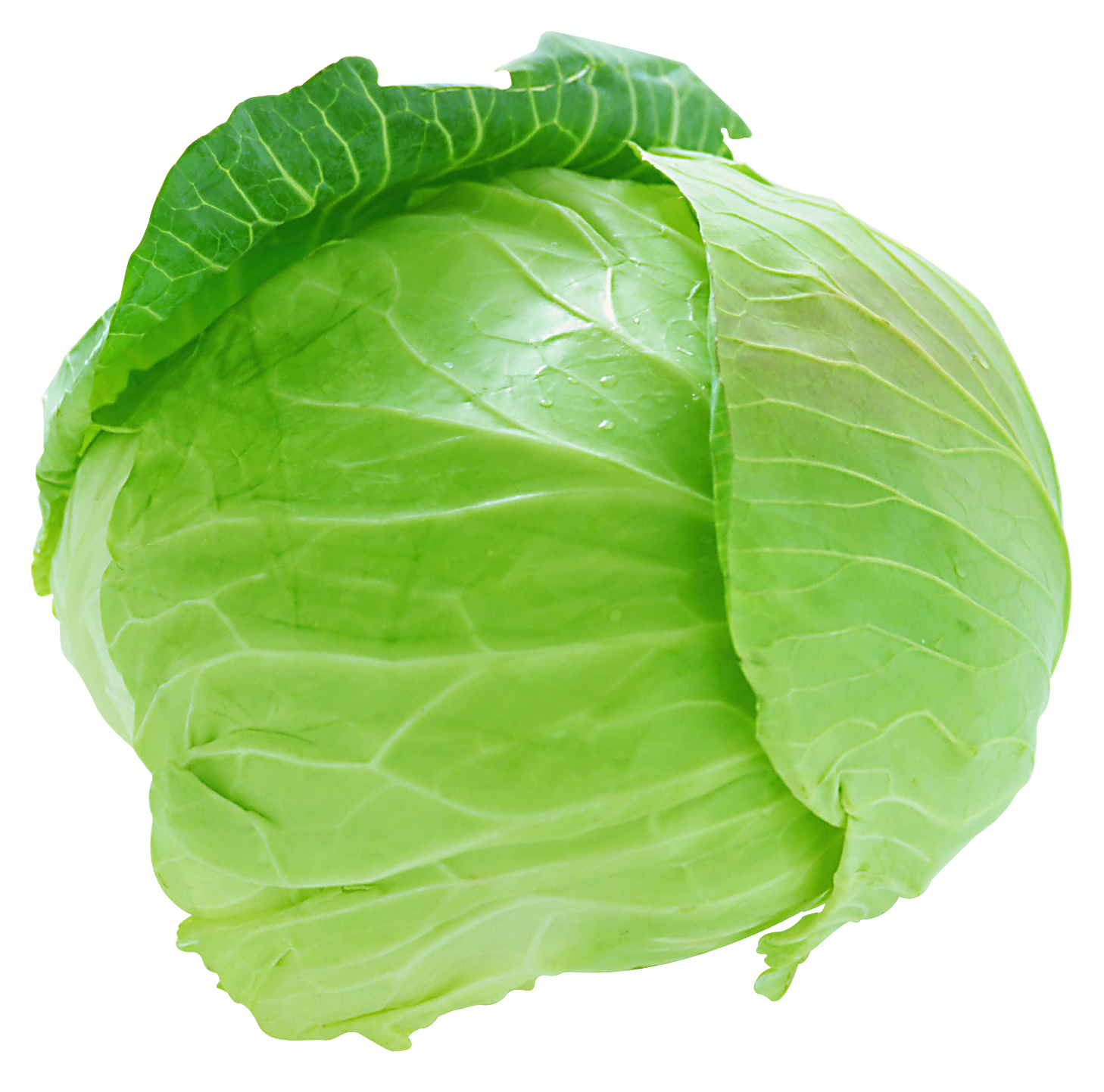 Lettuce purple pencil and. Clipart vegetables cabbage