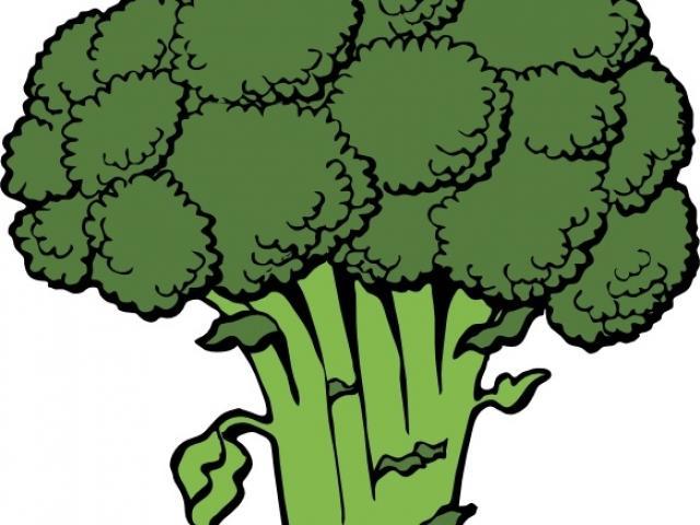 broccoli clipart sketch