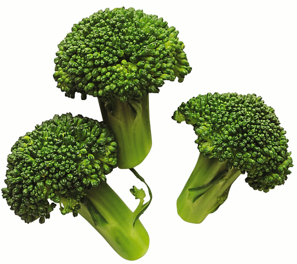 Free picture of. Celery clipart broccoli