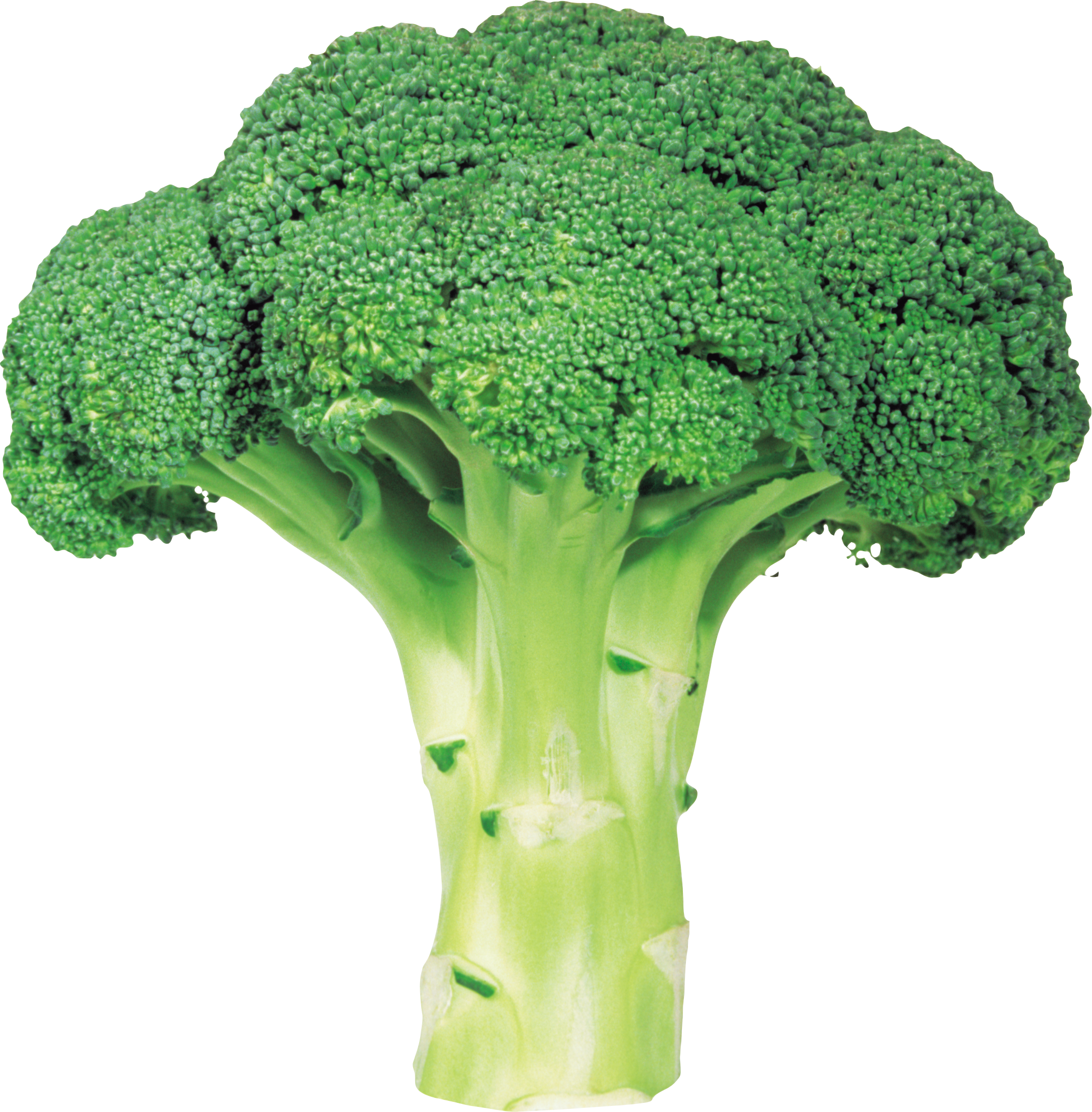 Broccoli google search final. Vegetables clipart cabbage