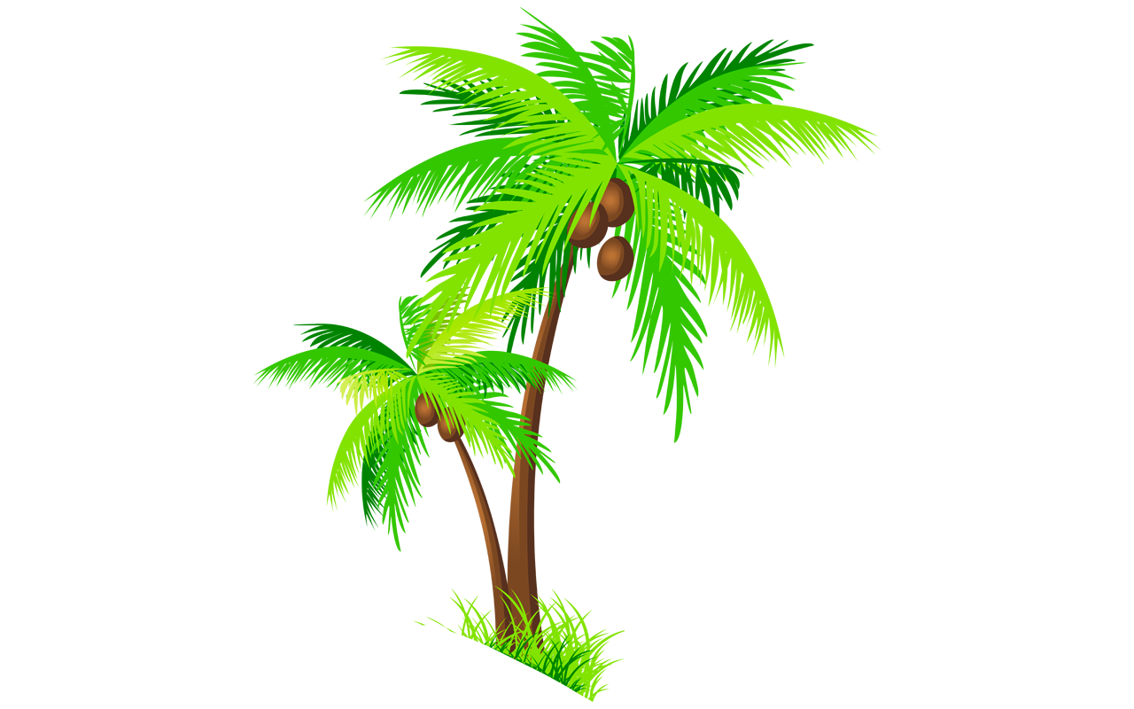 Clipart leaf coconut tree.  broom