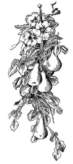 Basket of fruit clip. Brunch clipart victorian