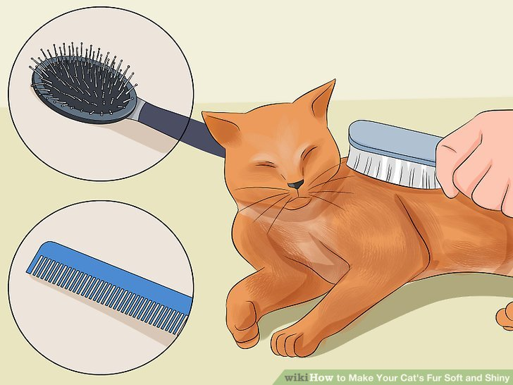 Brush clipart cat. How to make your