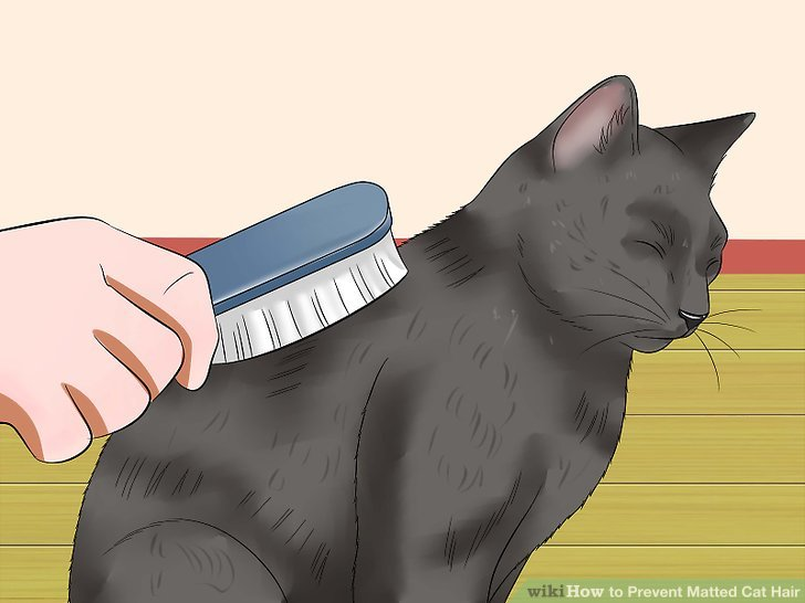 ways to prevent. Brush clipart cat