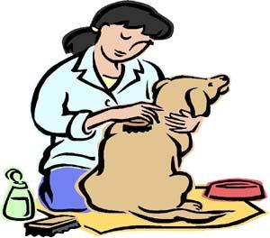 Brush clipart dog brush. Basic grooming