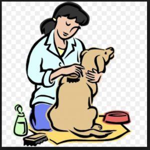 Brush clipart dog brush. Iolanda german shepherd kennels
