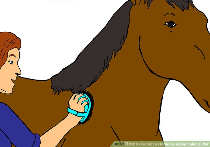 Brush clipart horse. How to groom a