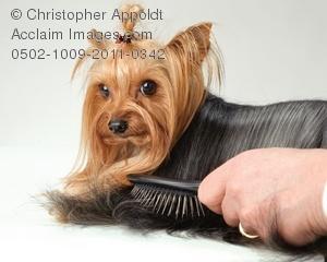 Brush clipart pet brush. Hair stock photography acclaim