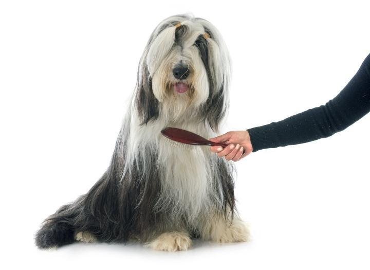 Brush clipart pet brush. What is the best
