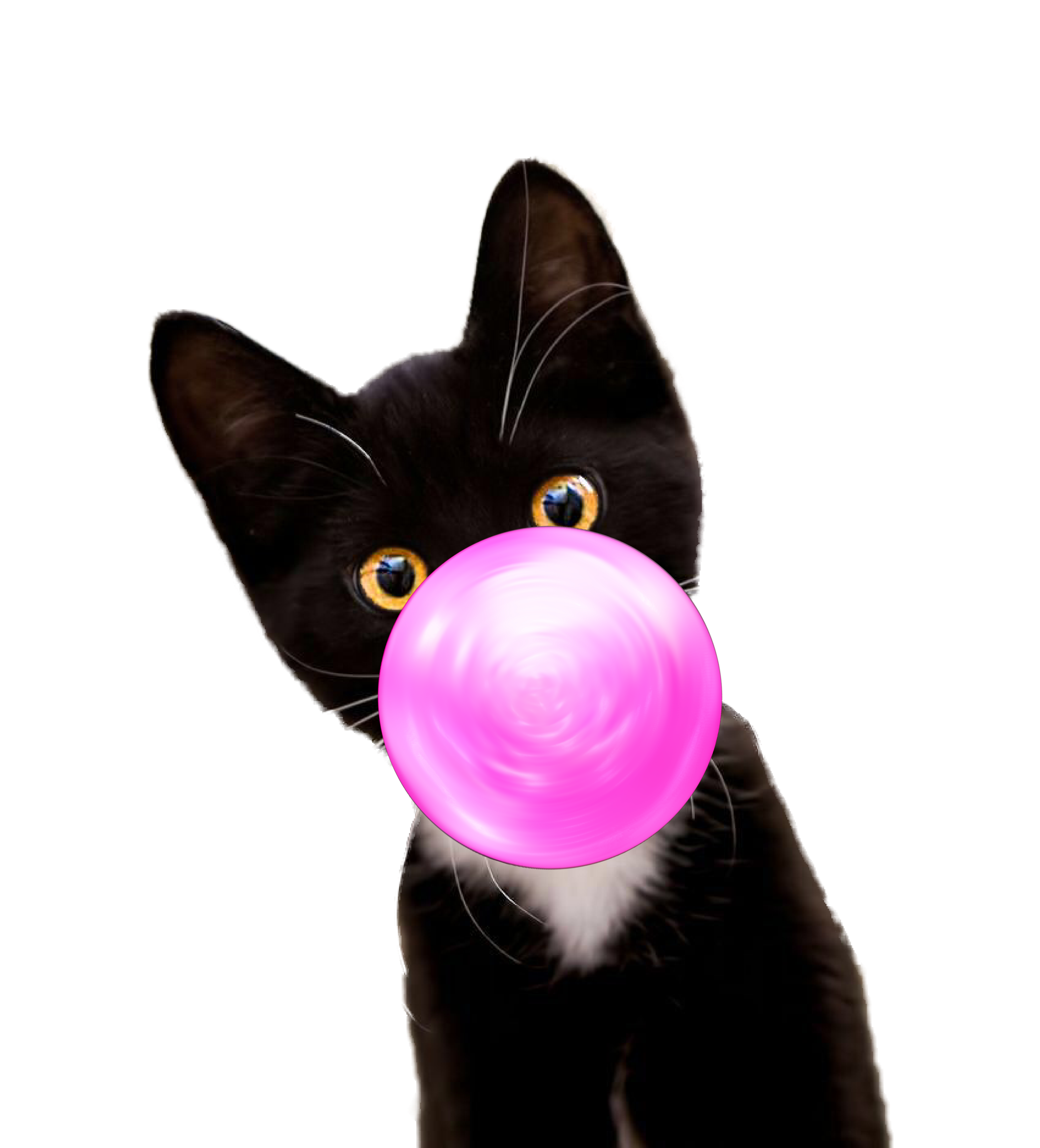 . Bubble Gum Kitten