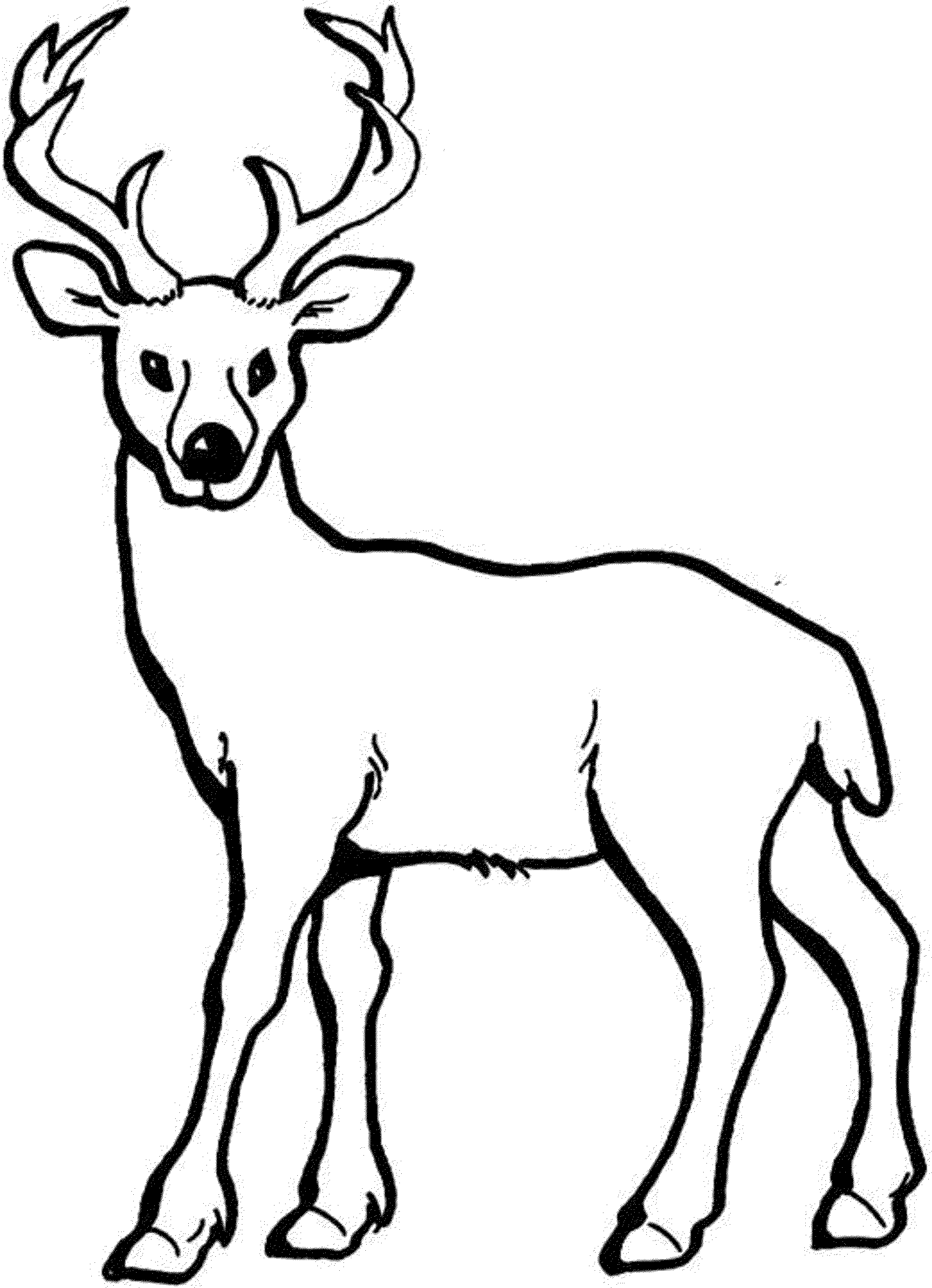 Buck clipart drawing. At getdrawings com free