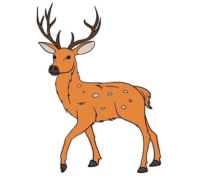 Clipart reindeer realistic. How to draw a