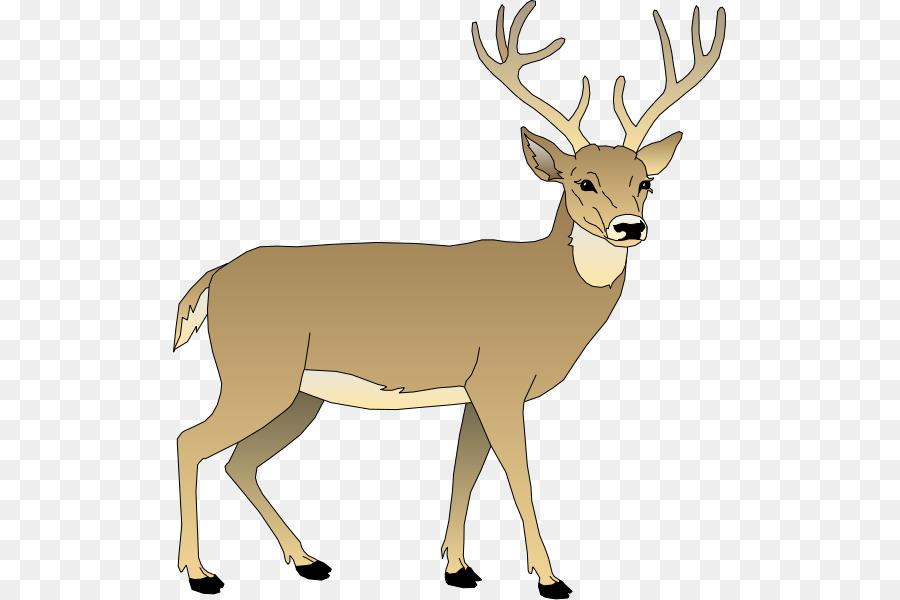 Whitetail buck clip art. Deer clipart white tailed deer