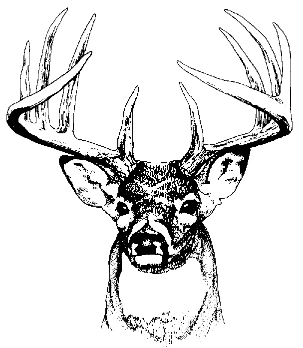 Hunting clipart white tail. Deer clip art google