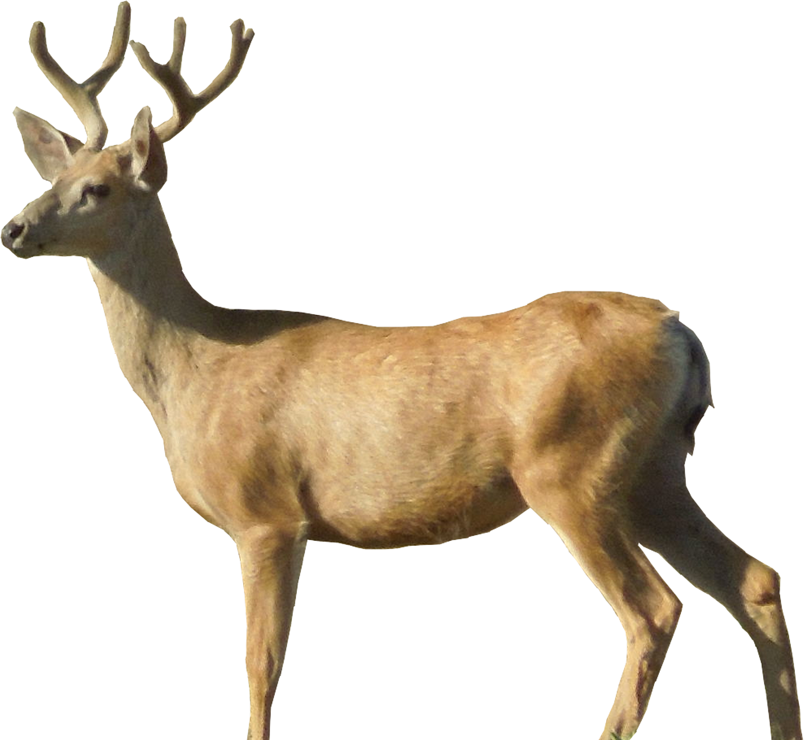 Deer clipart realistic. Dear png hd transparent