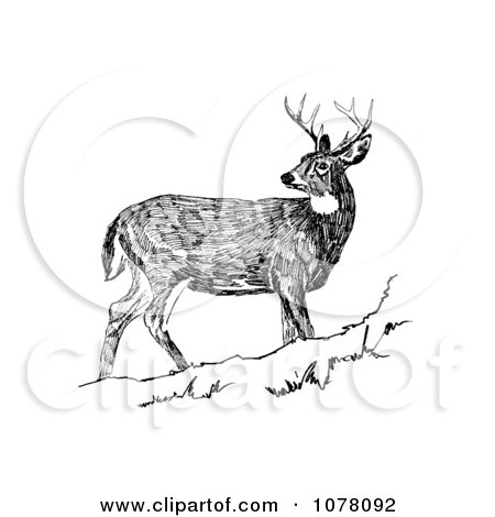 Buck clipart white tailed deer. Cilpart crafty inspiration ideas