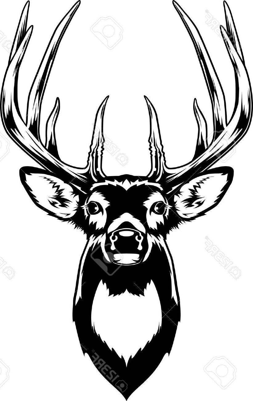 Whitetail drawing at getdrawings. Buck clipart white tailed deer