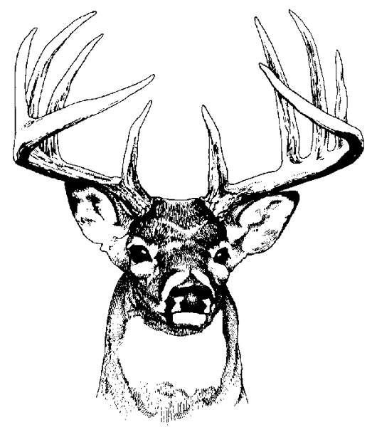 collection of high. Buck clipart whitetail deer