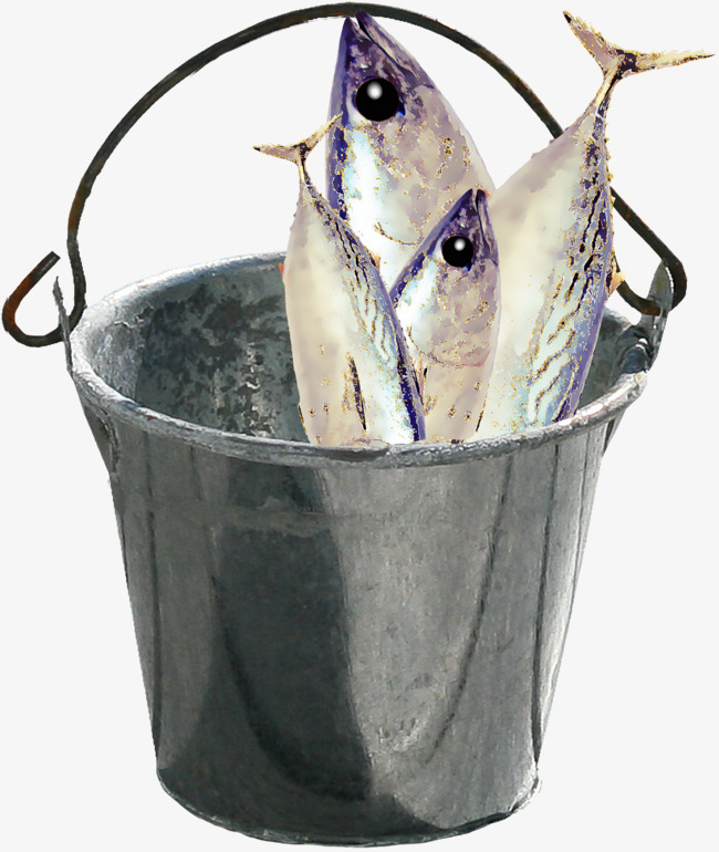 Drum fish png image. Bucket clipart fishing