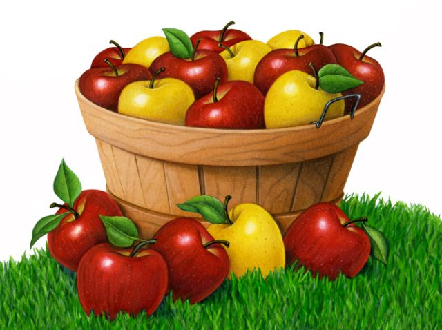 best apple clip. Bucket clipart fruit