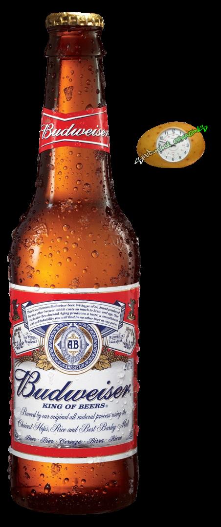 Beer image. Budweiser bottle png