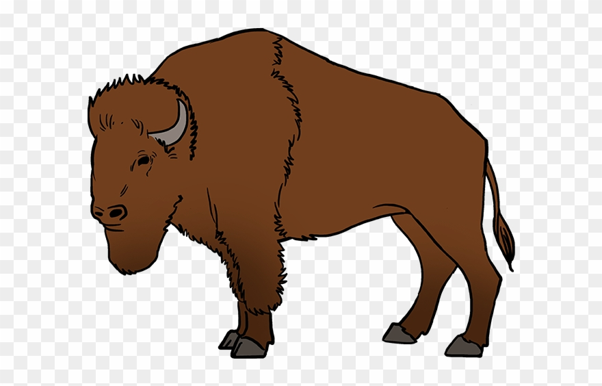 Buffalo clipart. How to draw a