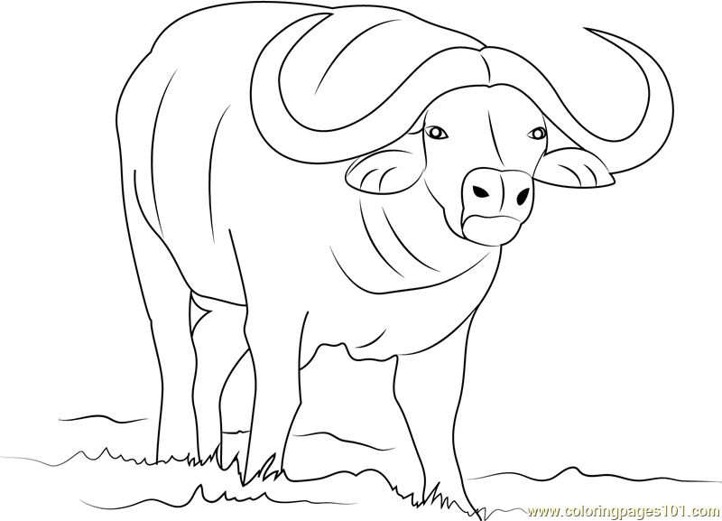 Coloring page free pages. Buffalo clipart african buffalo
