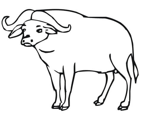 Coloring page free printable. Buffalo clipart african buffalo
