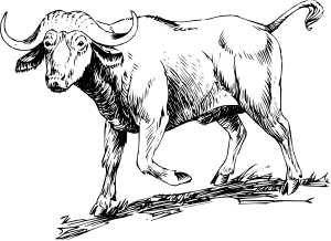 Buffalo clipart black and white. Clip art at clker
