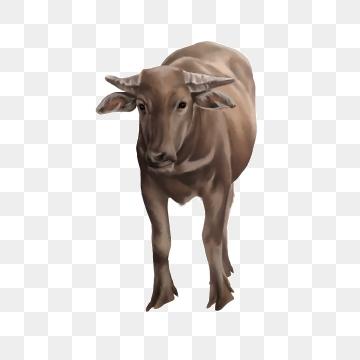 Png vector psd and. Buffalo clipart buffalo animal