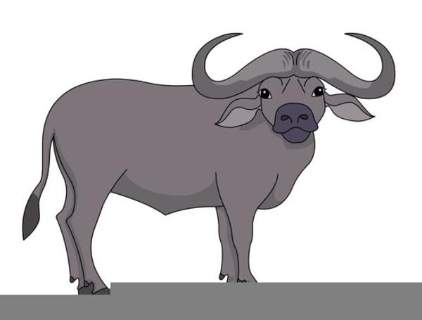 Buffalo clipart buffalo animal. Cape free images at