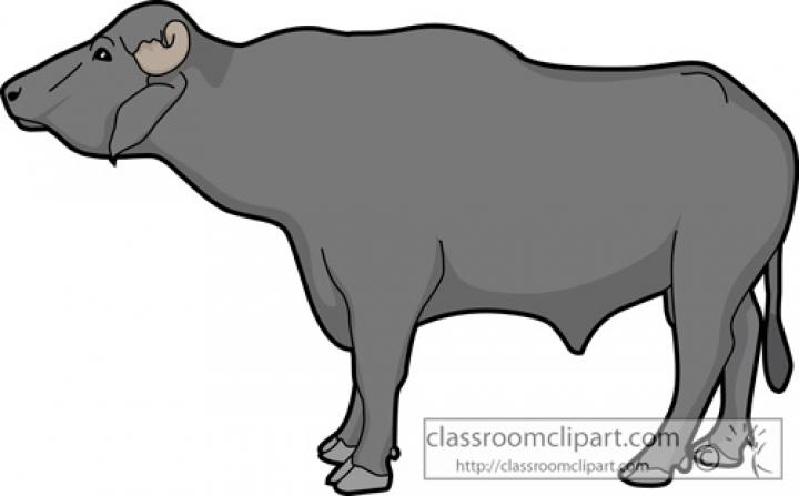 Buffalomale classroom inside png. Buffalo clipart buffalo indian