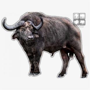 Buffalo clipart cape buffalo. Water illustrator lion