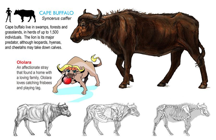 Buffalo clipart cape buffalo. By susans art portfolio