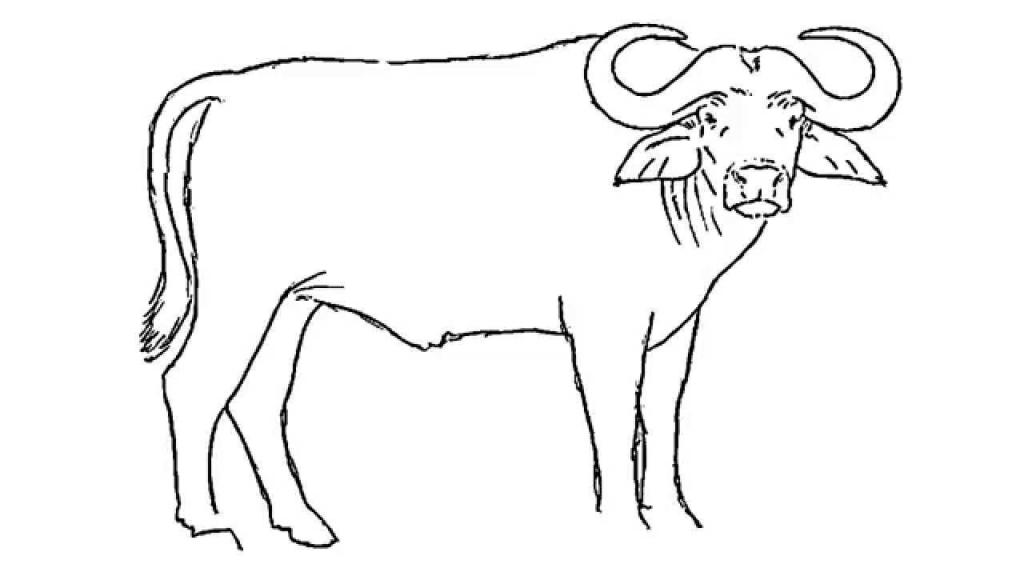 Drawing of a how. Buffalo clipart cape buffalo
