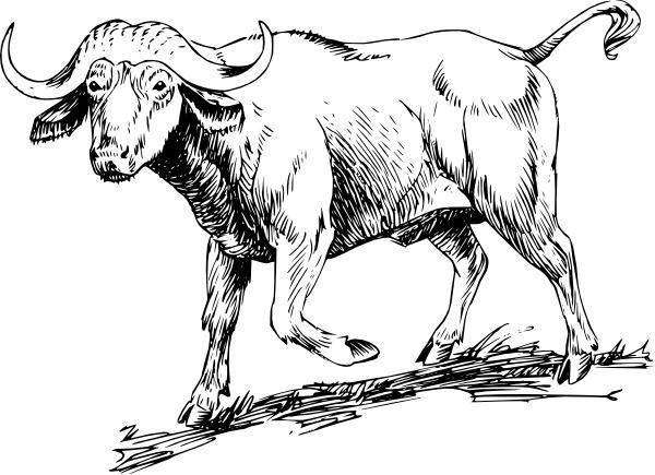 Clip art free vector. Buffalo clipart cow