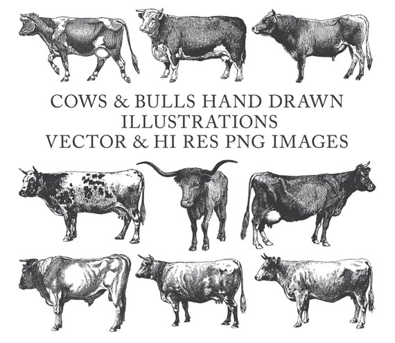 Buffalo clipart cow. Bull farm hand drawn